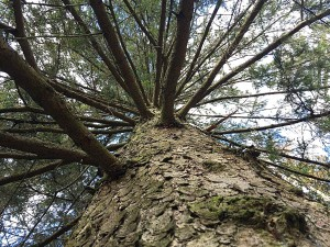 Baum aufgerichtet
